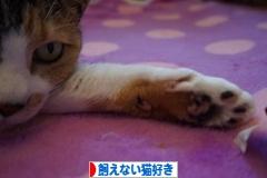 にほんブログ村 猫ブログ 飼えない猫好きへ