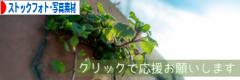 にほんブログ村 写真ブログ ストックフォト・写真素材へ