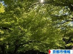 にほんブログ村 地域生活(街) 関西ブログ 京都(市)情報へ
