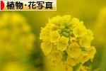にほんブログ村 写真ブログ 植物・花写真