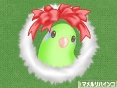 にほんブログ村 鳥ブログ マメルリハインコ
