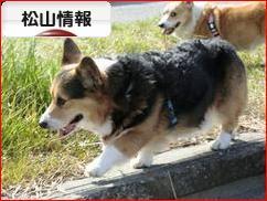 にほんブログ村 地域生活(街) 四国ブログ 松山情報へ
