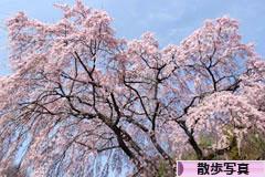 にほんブログ村 写真ブログ 散歩写真へ