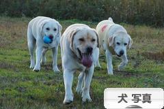 にほんブログ村 犬ブログ 犬 写真