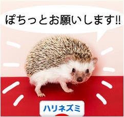 にほんブログ村 小動物ブログ ハリネズミ