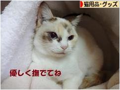 にほんブログ村 猫ブログ 猫用品・グッズ