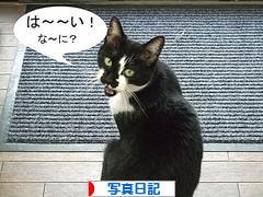 にほんブログ村 写真ブログ 写真日記