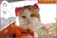 にほんブログ村 猫ブログ スコティッシュフォールドへ