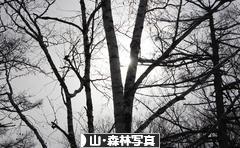 にほんブログ村 写真ブログ 山・森林写真
