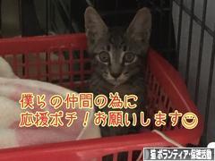 にほんブログ村 猫ブログ 猫 ボランティア・保護活動