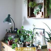 にほんブログ村 花・園芸ブログ グリーンのある暮らし